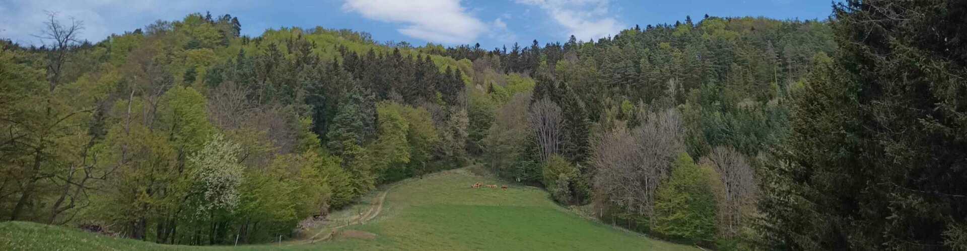 Berglandschaft mit Bäumen und Kühen in der Ferne